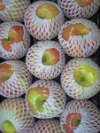 Fuji Apples (Seasonal Late September first ones arrive)